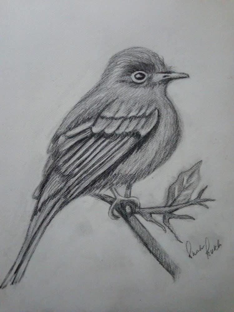 Pencil sketch IMG_20190617_234254