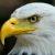 Profile picture of Swati